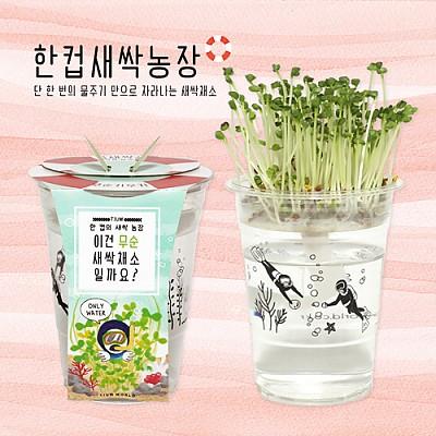 한컵새싹농장 무순(5세트)