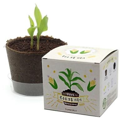 팜팜농장 옥수수(5세트)